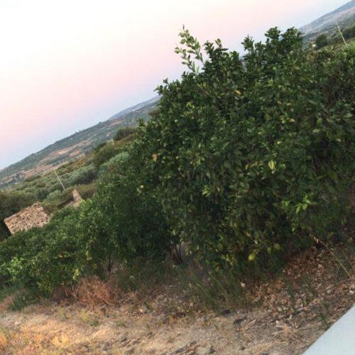 Paesaggio-catanese